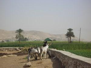 La historia de la familia Najjar