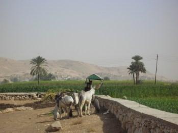 Egipto, cerca de las ruinas de Abu Simbel