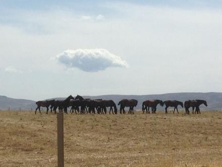 Caballos en la pradera, al fondo, la provincia de Segovia. Foto: Carlos Alameda