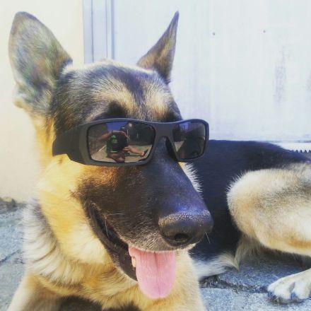 Kane con gafas de sol Foto: David Fdez Alameda